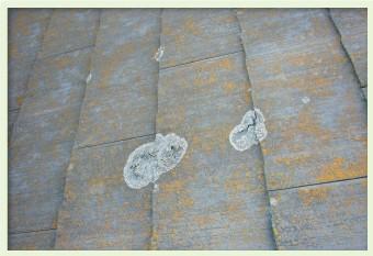 屋根材が色褪せしたままにしておくとコケが発生